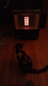 Schlaue Katze vor dem Ofen im Hostel