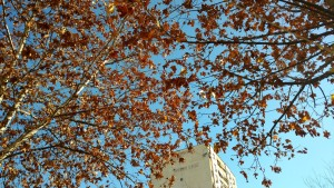 Herbststimmung zum Jahreswechsel