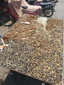 Muscheln auf dem Markt