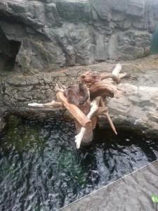 Schläfrige Otter