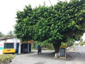 Der Internetbaum (Hotspot)