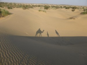 Mit dem Wüstenschiff unterwegs