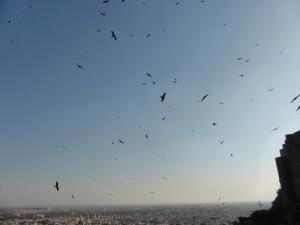 Die Vögel auf Mehrangarh