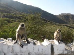Affen am Straßenrand (Nicht das Fenster runterlassen warnte uns der Fahrer)