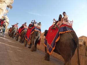 Eine Reihe von Elefanten trägt die Besucher zum Fort Amer hinauf