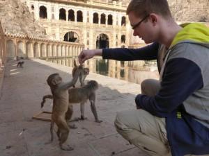 Affen füttern