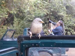 Ein Angry-Bird