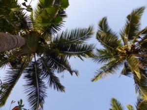 Palmen in Verkala