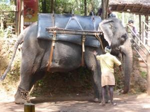 Elefantenreiten: Check