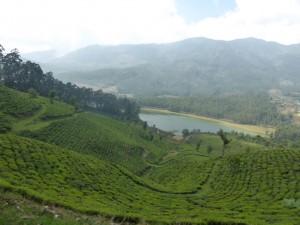 Teeplantagen nahe Munnar