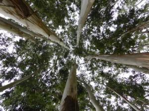 Wald nahe Munnar