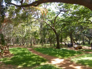 Der Cubbon Park (nicht so geplfegt wie der Lalbagh Park)