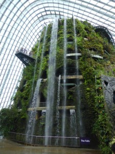 Der Cloud Forest