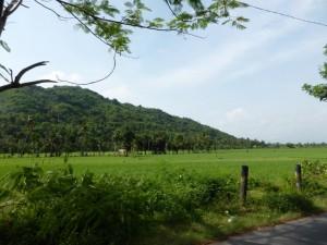 Reisfelder in Lombok
