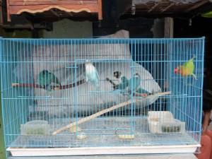 Auf dem Bird Market