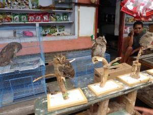 Euelen auf dem Bird Market