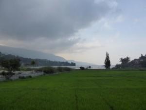 Saftig, grüne Reisfelder