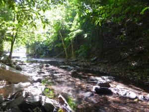 Im Jungle von Koh Lanta