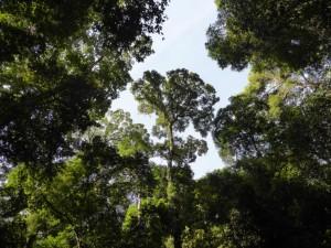 Ein Lichtblick im dichten Jungledach