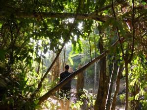 David findet das Ende des Jungles