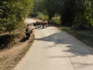 (Große) Tiere haben Vorfahrt