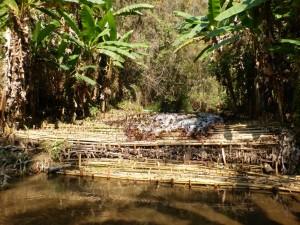 Kleine Bambusstaumauer mitten im Jungle
