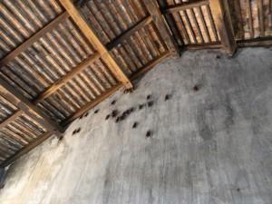 Das War Museum bietet auch Fledermäusen ein Zuhause