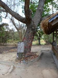 An diesem Baum wurden Kindern der Schädel zertrümmert