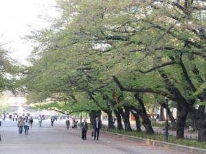 Unterwegs im Ueno-Park