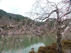 Kirschblüte im Hida Folk Village
