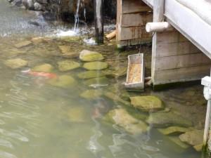 Fischfutter im Selbstbedienugs-Drive-Inn