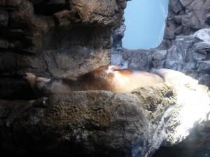 Im Kaiyūkan Aquarium