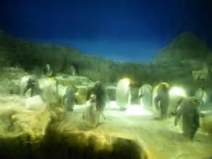 Pinguine im Kaiyūkan Aquarium