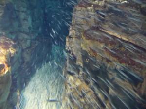 Sardinen im Kaiyūkan Aquarium