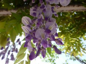 Blumen im Memorial Park