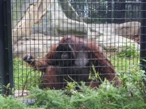 Im bot. und zoologischen Garten