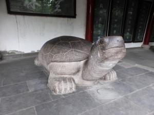 Schildkröte in der Wenshu Monastry