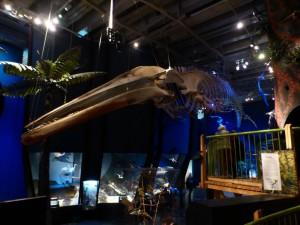 Blue Whale im Te Papa